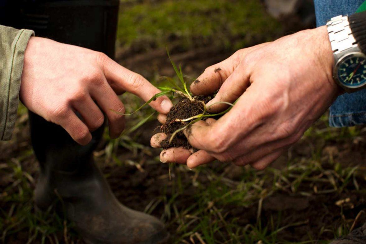 Почвени и листни анализи – Вземане на Правилни Решения за Вашите Бъдещи Култури