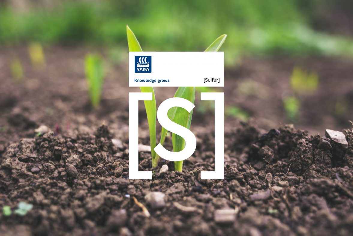 Почвени и листни анализи от Яра